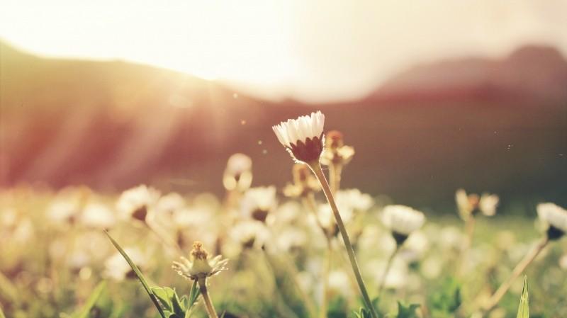 wildflowers-in-meadow-in-sun